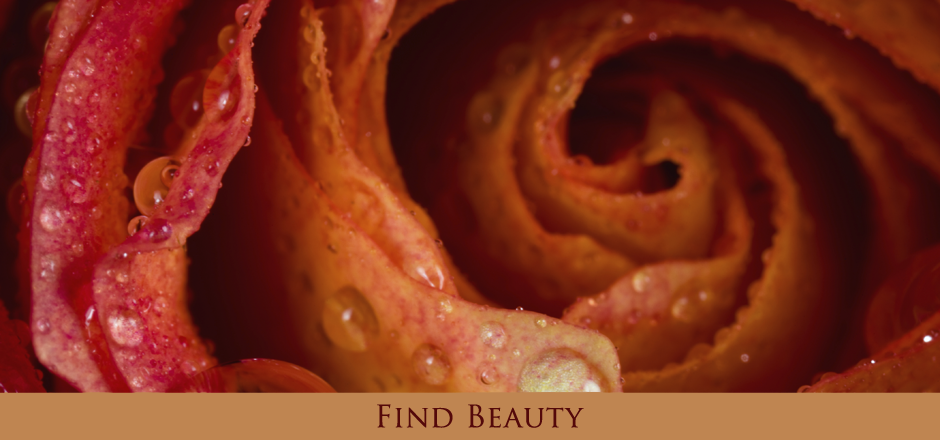 Find Beauty Through Experiences from Kuhn and Seaver Publishing
